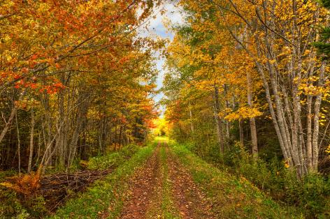 autumn-path-matt-dobson
